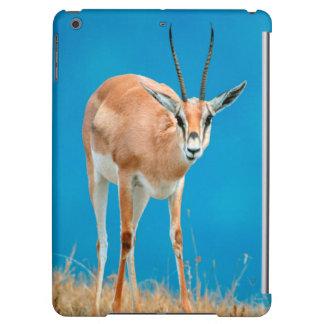 Portrait de brebis de la gazelle de Grant (Gazella