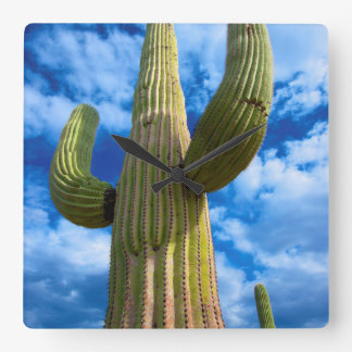 Portrait de cactus de Saguaro, Arizona Horloge Carrée