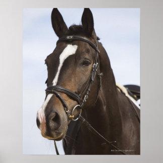 portrait de cheval brun posters