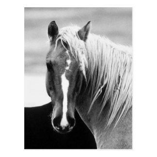 Portrait de cheval de BW Carte Postale