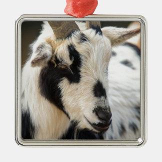 Portrait de chèvre ornement carré argenté