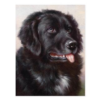 Portrait de chien de Terre-Neuve Carte Postale