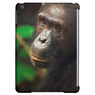 Portrait de chimpanzé (troglodytes de casserole)
