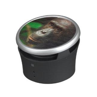 Portrait de chimpanzé (troglodytes de casserole) haut-parleur