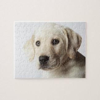 Portrait de chiot blond de labrador retriever puzzle