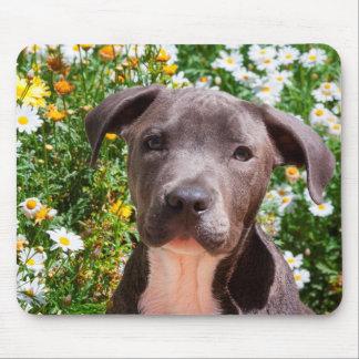 Portrait de chiot de bull-terrier du Staffordshire Tapis De Souris