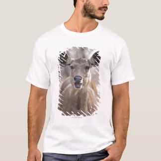 Portrait de daine de cerfs communs de Sambar (Rusa T-shirt
