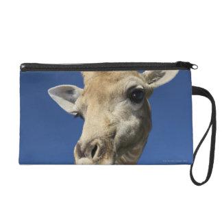 Portrait de girafe (Giraffa Camelopardalis) Dragonne