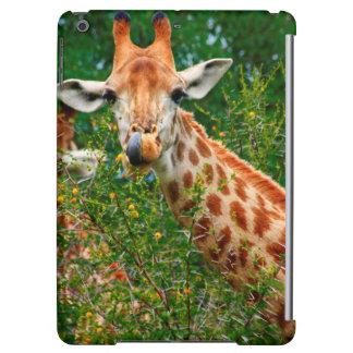 Portrait de girafe, parc national de Kruger