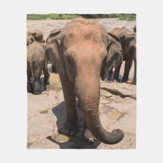 Portrait de groupe d'éléphant, Sri Lanka Couverture Polaire