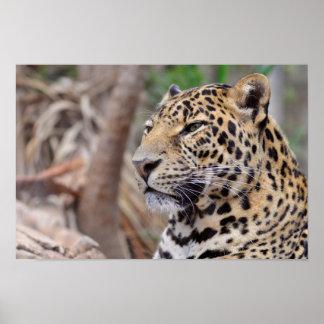 Portrait de léopard poster