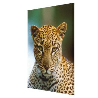 Portrait de léopard toile