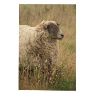 Portrait de moutons impression sur bois