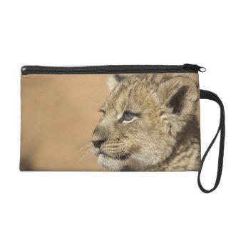 Portrait de petit animal de lion (Panthera Lion),  Dragonne