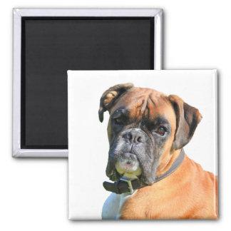 Portrait de photo de chien de boxeur beau magnets pour réfrigérateur