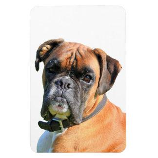 Portrait de photo de chien de boxeur beau magnets en vinyle