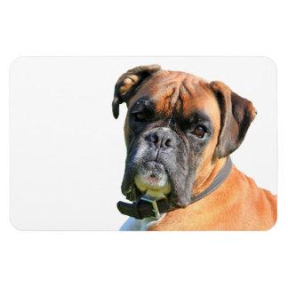 Portrait de photo de chien de boxeur beau magnet rectangulaire