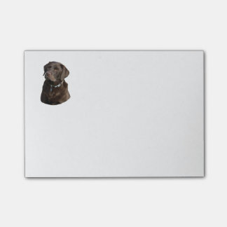 Portrait de photo de chien de Labrador de chocolat