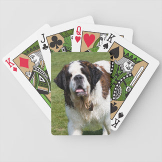Portrait de photo de chien de St Bernard beau, cad Cartes Bicycle Poker