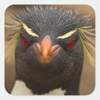Portrait de pingouin de Rockhopper Sticker Carré