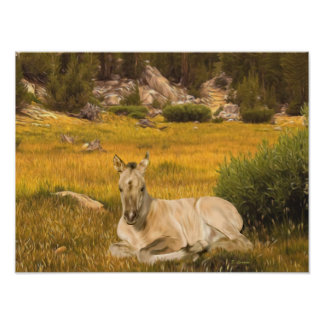 Portrait de poulain de cheval de peau de daim poster