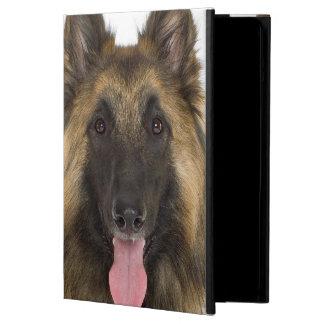 Portrait de studio de chien de berger belge