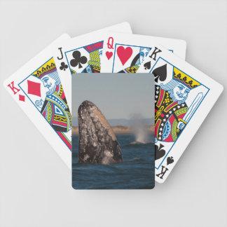 Portrait de tête de baleine grise jeu de cartes