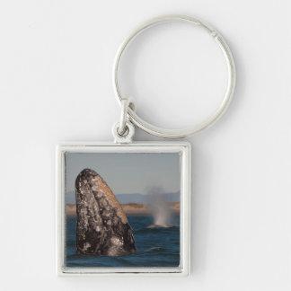 Portrait de tête de baleine grise porte-clé carré argenté
