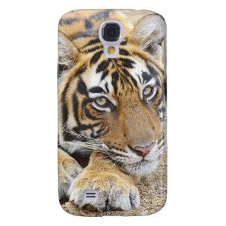 Portrait de tigre de Bengale royal, Ranthambhor 4 Coque Galaxy S4