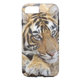 Portrait de tigre de Bengale royal, Ranthambhor 4 Coque iPhone 8/7