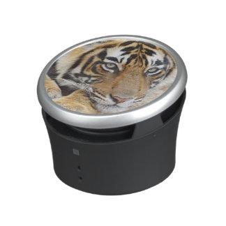 Portrait de tigre de Bengale royal, Ranthambhor 4 Haut-parleur