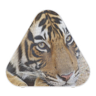 Portrait de tigre de Bengale royal, Ranthambhor 4 Haut-parleur Bluetooth