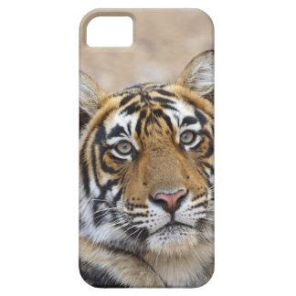 Portrait de tigre de Bengale royal, Ranthambhor Coques Case-Mate iPhone 5