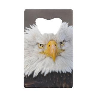 Portrait d'Eagle chauve, Eagle chauve en vol,