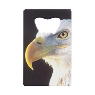 Portrait d'Eagle chauve, leucocephalus de