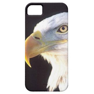Portrait d'Eagle chauve, leucocephalus de Coque iPhone 5 Case-Mate