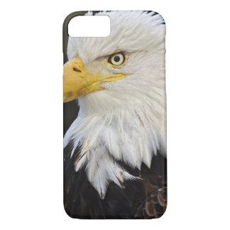 Portrait d'Eagle chauve, leucocephalus de Coque iPhone 7