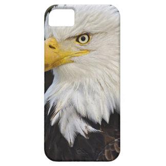 Portrait d'Eagle chauve, leucocephalus de Coques iPhone 5 Case-Mate