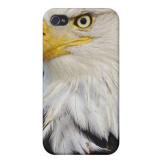Portrait d'Eagle chauve, leucocephalus de Haliaetu Étui iPhone 4/4S
