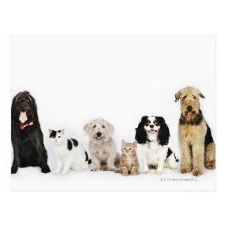 Portrait des chats et des chiens se reposant cartes postales