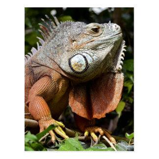 Portrait d'iguane vert carte postale