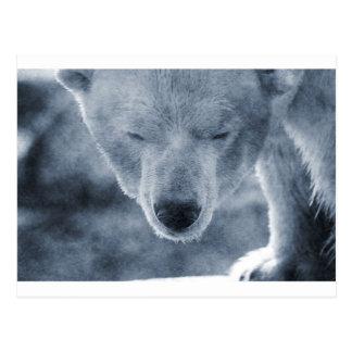 Portrait d'ours blanc carte postale