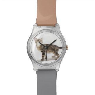 Portrait du chaton blanc recherchant montres bracelet