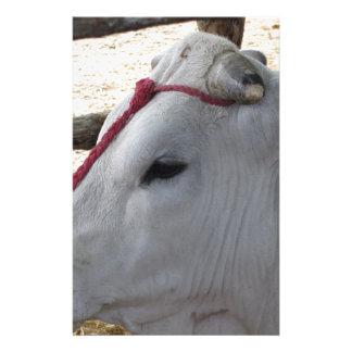 Portrait du Chianina, race italienne des bétail Papier À Lettre