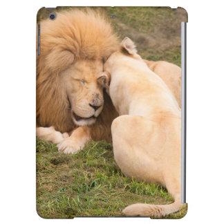 Portrait du mâle et de la femelle blancs de lion