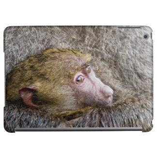 Portrait d'un babouin olive de bébé (Papio Anubis)