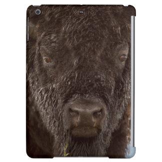 Portrait d'un bison Taureau sous la pluie