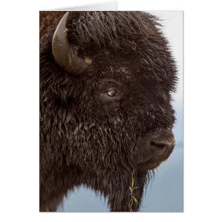 Portrait d'un bison Taureau sous la pluie 2 Carte De Vœux