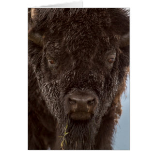 Portrait d'un bison Taureau sous la pluie Carte De Vœux