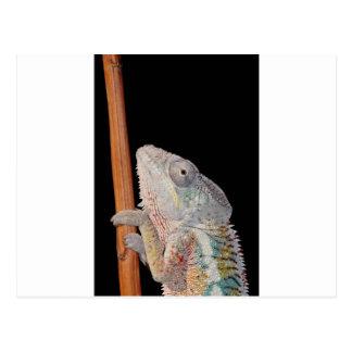 portrait d'un caméléon de panthère de mâle (pair cartes postales